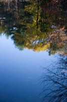 Walden Pond Reflection